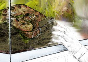 Automatisches Verhalten (Verhaltensmuster) bei Angst dargestellt am Beispiel von Darwin und seinem Verhaltensexperiment mit einer Puffotter. Die Skizze zeigt Darwin (rechts) und ein Terrarium (links) in dem sich eine Schlange befindet. Darwin hält die Hand an die Glasscheibe. Zeichnung mit Bleistift, das Terrarium auch in Farbe. Grün, beige.