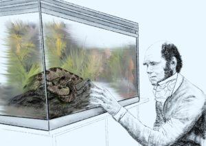 Automatisches Verhalten (Verhaltensmuster) bei Angst dargestellt am Beispiel von Darwin und seinem Verhaltensexperiment mit einer Puffotter